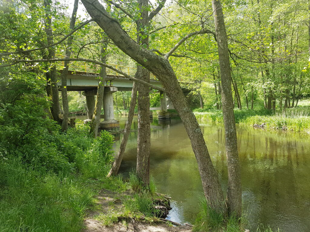 rzeka wda spływ kajakowy