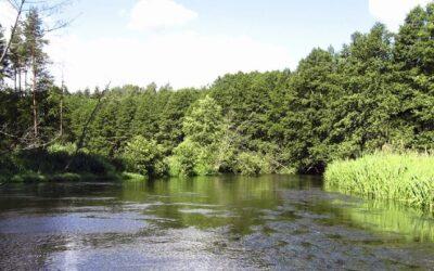 Dlaczego warto wybrać spływ kajakowy Wdą w Borach Tucholskich