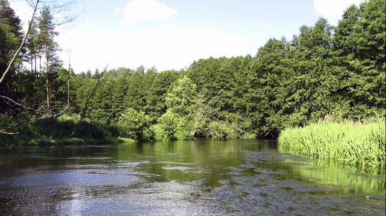 Spływ kajakowy Wda